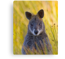 Lonely Swamp Wallaby 1 Canvas Print