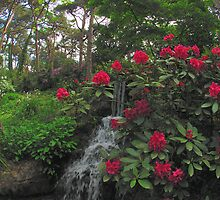 Compton Acres - Rhododendrons by the waterfall by delros
