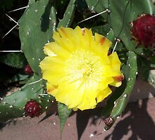 Beautiful cactus by daffodil