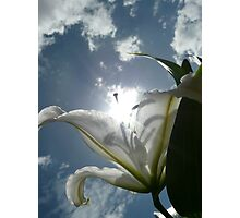 Sun Lilly Photographic Print