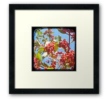 Berry Red Framed Print