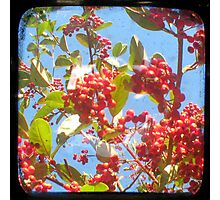 Berry Red Photographic Print