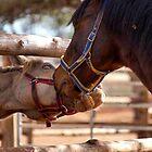 """HORSE-TALK"" by Magaret Meintjes"