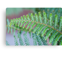 Sleepy Hollow Fern Canvas Print
