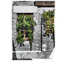 Window Ivy Poster
