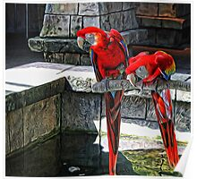 Scarlet Macaws Painted Poster