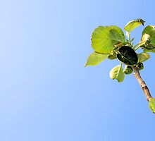 apple, garden, green nature by dimm808