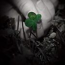 Luck  by Mena Assaily