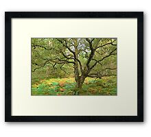 Characterful Framed Print
