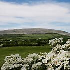 Burren Flowers!  by Maureen  Geraghty