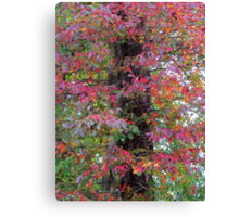 Fall Color Leaves Canvas Print