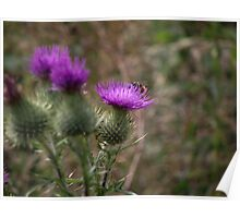 Thistle Hive Poster