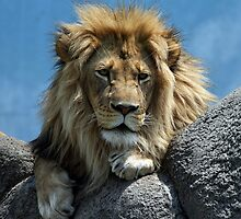 King by BigD