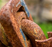 Old Farm Equipment  by Troy Dodds
