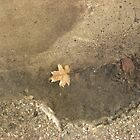 Leaf in a Spring Puddle by Brad & Melanie LaFrenier