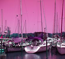 The Marina by Sheila McCrea
