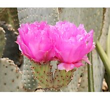 Double Pink Photographic Print