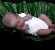 Baby sleeping in leaf by Michelle *