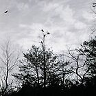 Crows by RobPM