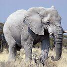 WHITE ELEPHANT by Michael Sheridan