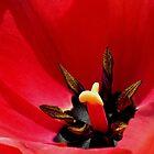 *Tulip Macro* by DeeZ (D L Honeycutt)
