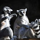 Ring-tailed Lemur Family by venny