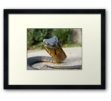 Black and Yellow Kill a Fellow  ( Tiger snake ) Framed Print