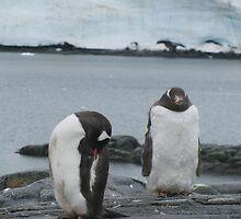 Penguin I by Alice Chai
