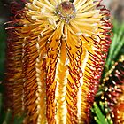 A top the Banksia by Tony Waite-Pullan