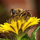 Pollen Feast by Frank Yuwono