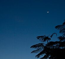 The Moon And The Tree by Matthew Stewart