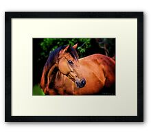Dream Stallion Framed Print