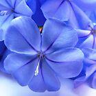 """""""Blue Crush"""" by Madonna McKenna"""