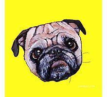 Butch the Pug - Yellow Photographic Print