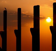 Pillars at sunset with a stark by naturalis