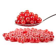 Red currant on white background Photographic Print