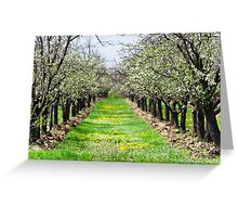 Orchard of plum trees Greeting Card