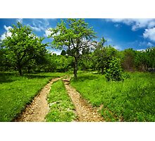 Rural road through meadow Photographic Print