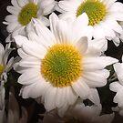White Daisy by Susan E. King