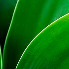 Agave Series... by Janine  Hewlett