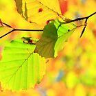 www.lizgarnett.com - Nov 01 by Liz Garnett