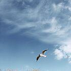 Beach Bird by Joakim