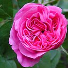 Gertrude Jekyll by Richard Elston