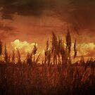 Harvest by DigitalGrail