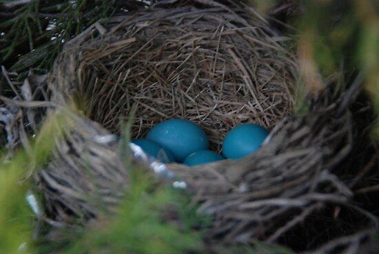 Robin's Eggs by Vonnie Murfin