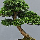 Bonsai  by sholder