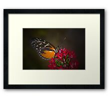 Quiet Butterfly Moment Framed Print