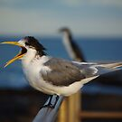 Tern by David  Hall