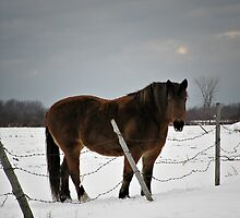 Horse in Winter by photoclique