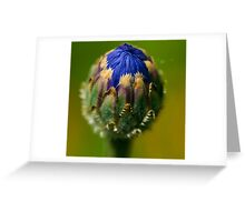 Colors and Textures Greeting Card